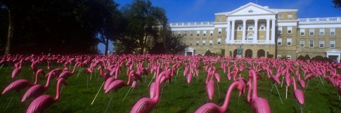 Le champ de flamand rose en plastique Photo via Quintessential Madison